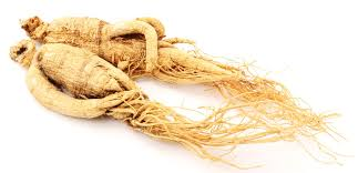 Chinese ginseng, also known as Panax promotes immune function