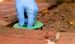 Termite Treatments for Your Home